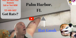 Palm Harbor Rat Signs