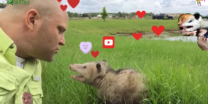 How To Kiss An Opossum