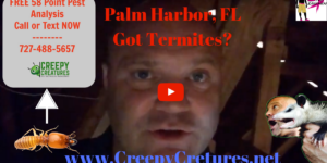 Homes in Palm Harbor With Termites