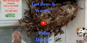 Palm Harbor's Bee, Wasp and Yellow Jacket Experts!