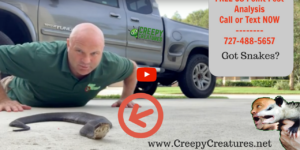 Snake removal in Palm Harbor, FL