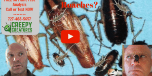 Get rid of roaches in Palm Harbor