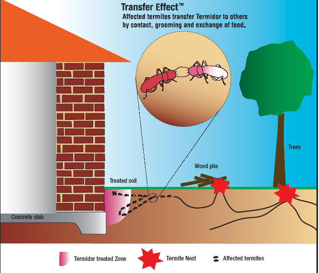 How Does Termidor Work?