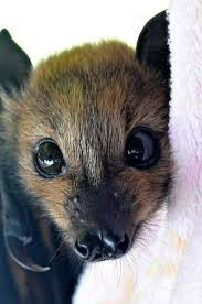 Real cute bat