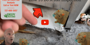 How to do a professional rat inspection