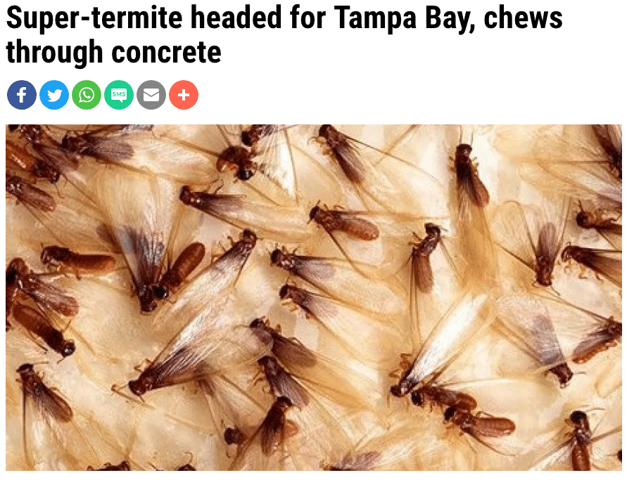 Formosan Termites in Tampa Bay Area!